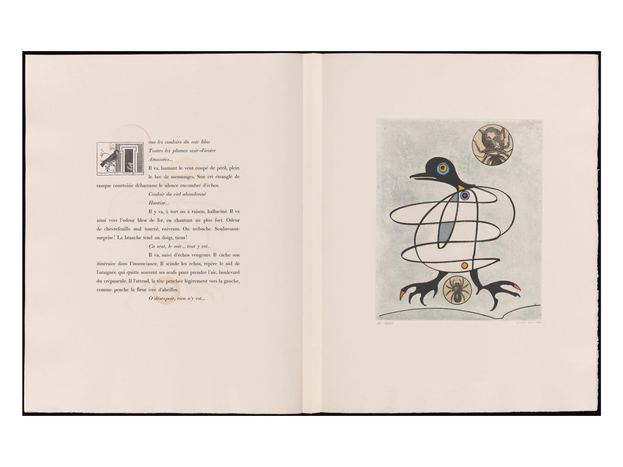 oiseaux-en-peril-07
